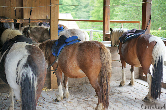 Ponyreiten Lochmühle