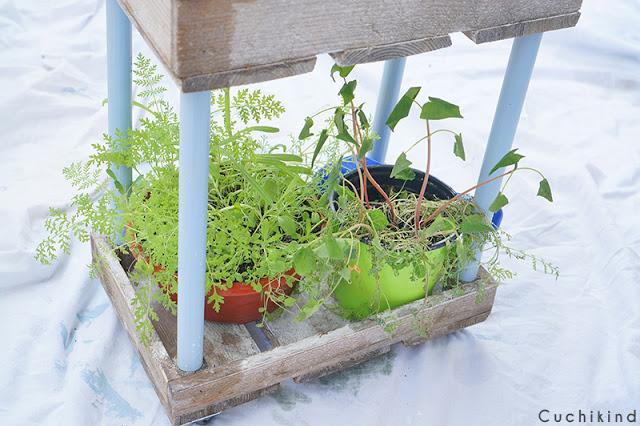Pflanzen DIY