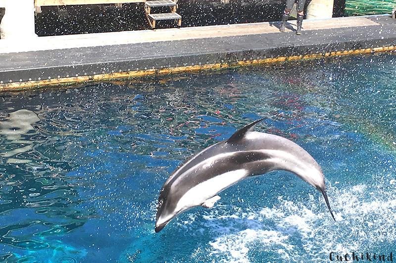 Delfin vancouver aquarium