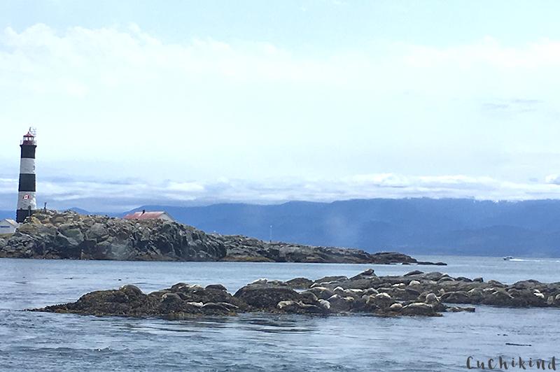 Seelöwen vancouver island