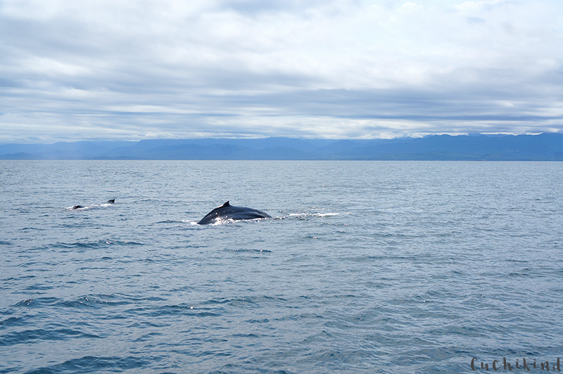 wale vancouver island