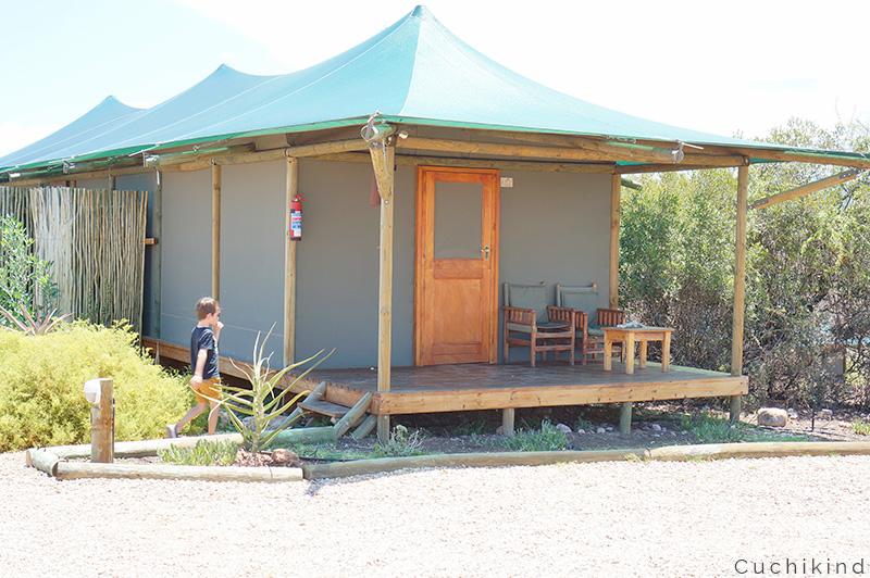 Safari_in_Südafrika