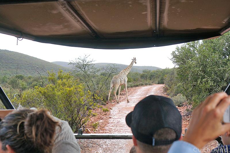 safari_gardenroute