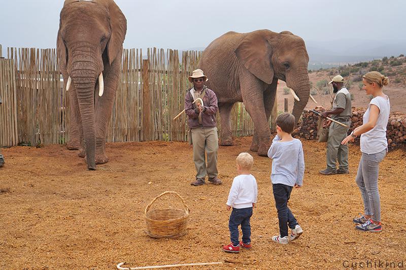 elefanten_füttern_Südafrika