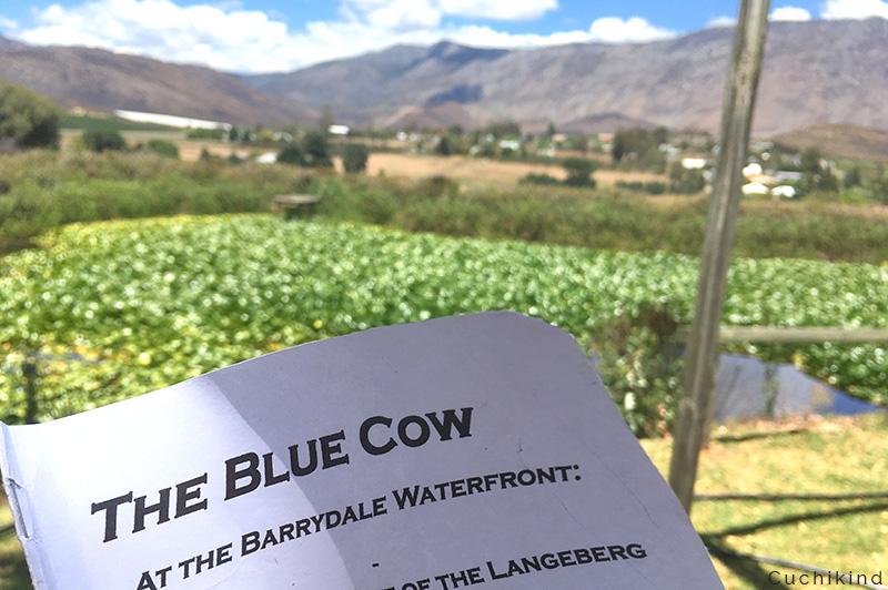 blue_cow_Südafrika