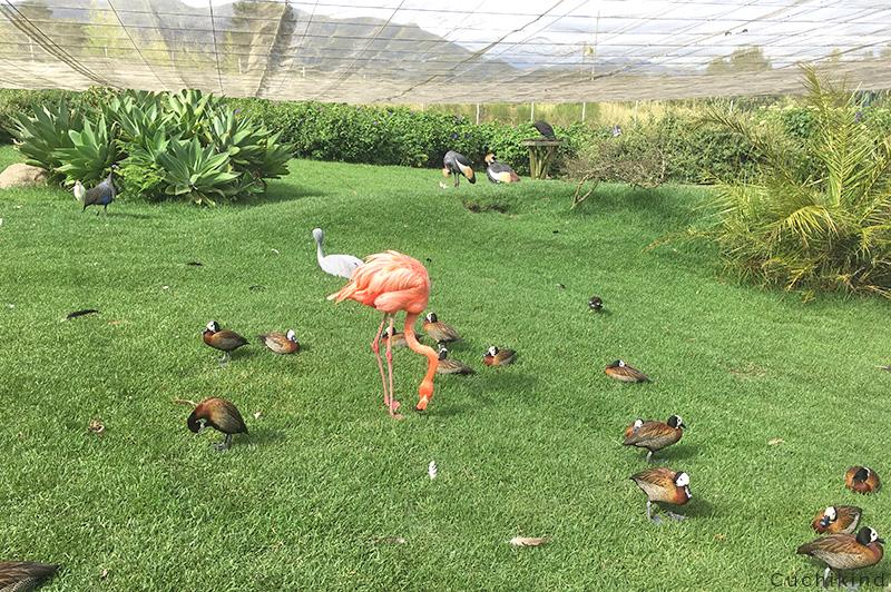 Südafrika_mit_kindern_Flamingo